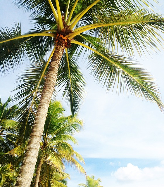 Palms - Safest cities in Florida to settle in featured image.