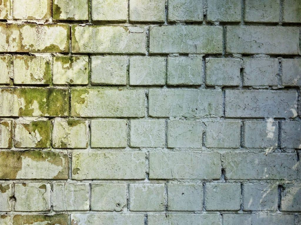 An exterior brick wall with mold, representing ways to remove mold from walls.